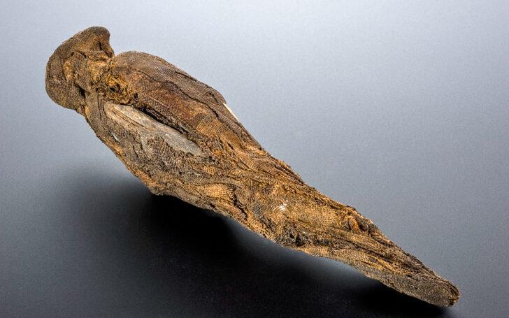 Мумифицированная птица. Фото Wellcome Images