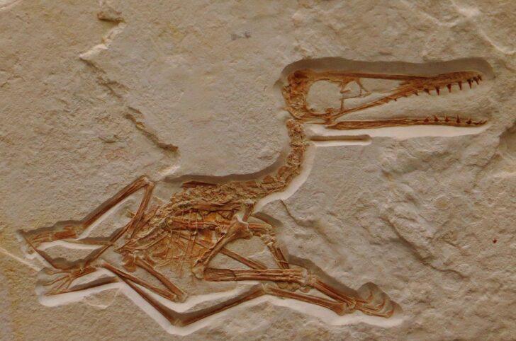 Птерозавр. Фото Ghedoghedo