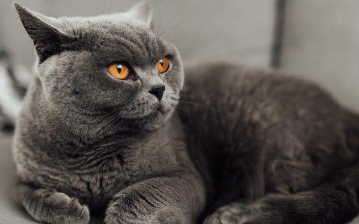 Кошка. Фото Josh Couch / Unsplash