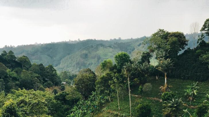 Колумбия. Фото Reiseuhu / Unsplash