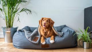 Собака. Фото Jamie Street / Unsplash