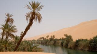 Оазис в Сахаре. Фото Luca Galuzzi