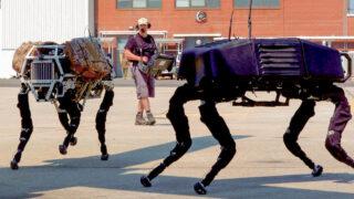 Роботы-собаки Boston Dynamics