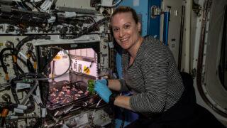 Астронавт NASA Кейт Рубинс собрала редис. Фото NASA