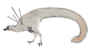 Ubirajara jubatus. Иллюстрация Luxquine (CC BY-SA 4.0)