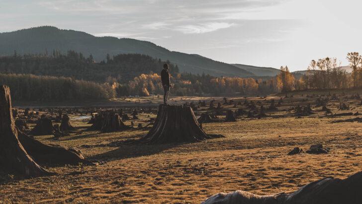 Утраченный лес в США. Фото Dave Herring / Unsplash