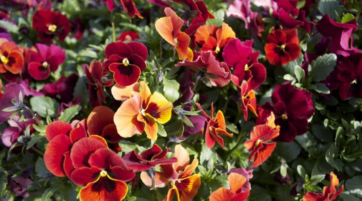 Цветы. Фото Patrick Nouhailler (CC BY-ND 2.0)