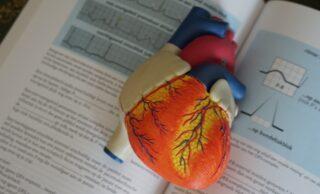 Модель сердца. Фото Unsplash / Robina Weermeijer