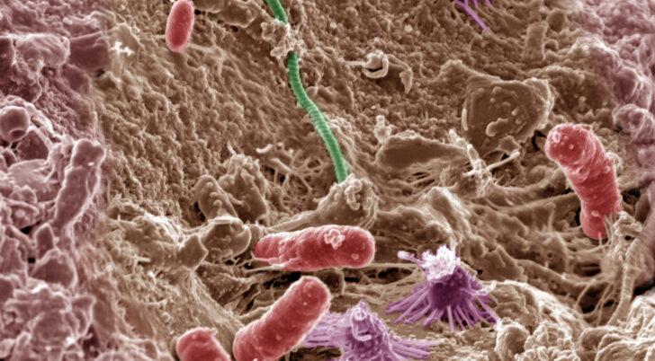 Почвенные микробы. Фото PNNL (CC BY-NC-SA 2.0)