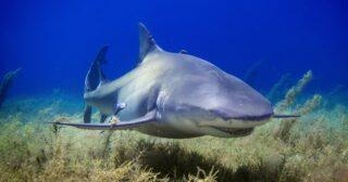 Акула. Фото Gerald Schömbs / Unsplash